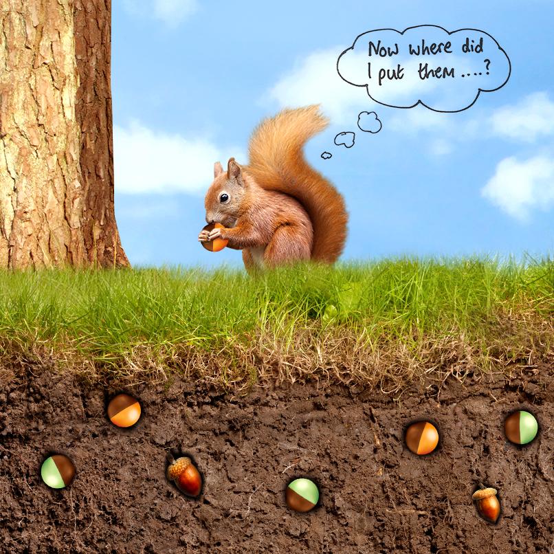 aero_fb_img_post_squirrel